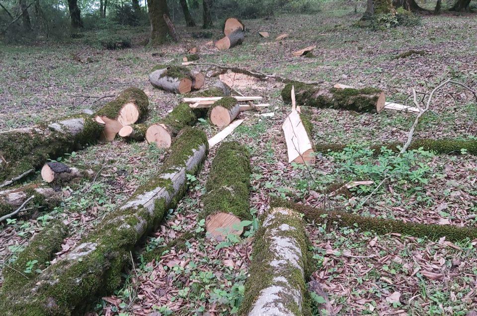 قلع و قمع درختان جنگلی